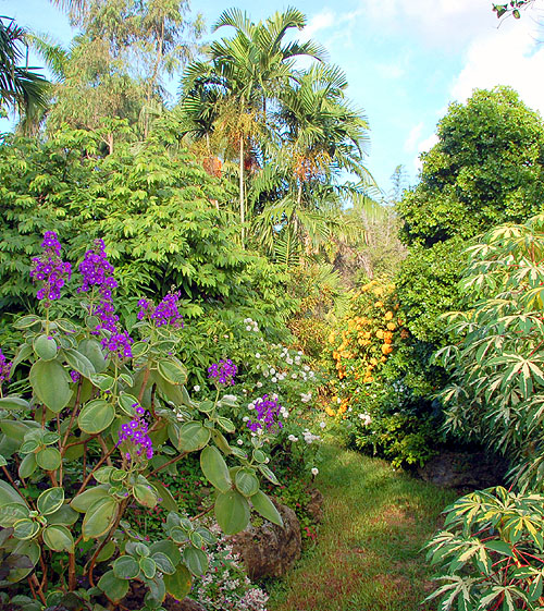 Tibouchina in a Tropical Landscape
